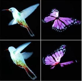 photo holographique